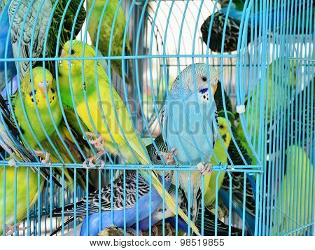 Many Parrots In One Cage