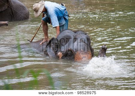 Lampang, Thailand - Mar. 26: Daily Elephants Bath At The Thai El