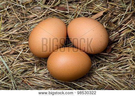 Three Eggs In The Hay Nest