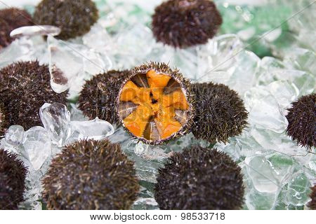 Fresh Sea Urchin On Sale In A Japanese Fish Market