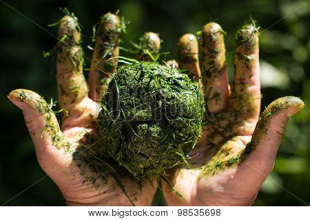 Hands Holds Ball Of Fresh Cut Grass