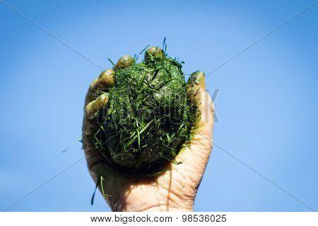 Hand Holds Ball Of Fresh Cut Grass