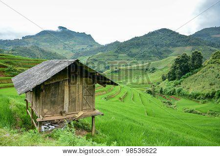 Hut In Green Terraced Rice Field