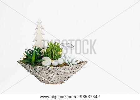 Christmas Plant Arrangement
