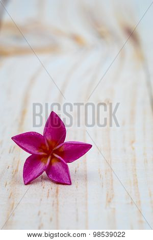 Single Pink Plumeria On Wood Floors.