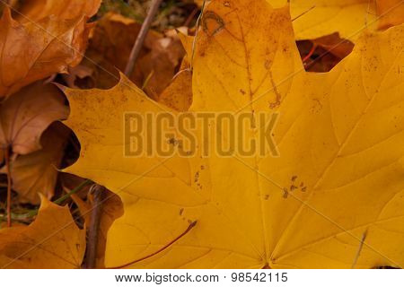 Autumn Yellow Leaves Background