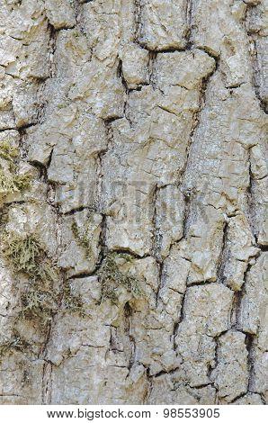 Cortex texture
