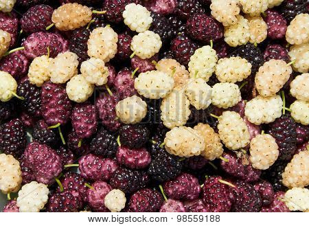 Background Made With Mulberry Heap