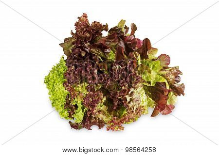 Colorful Lettuce