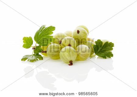 Green Gooseberries.