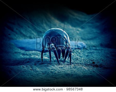 scientific illustration of a common dust mite