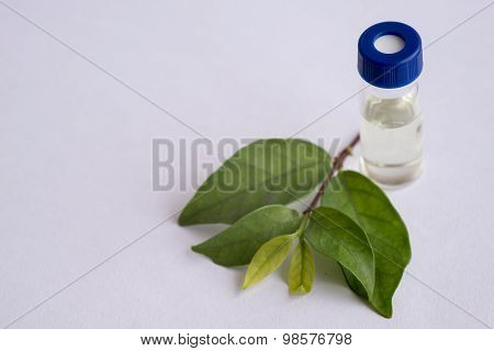 Sample Vial And Leaf