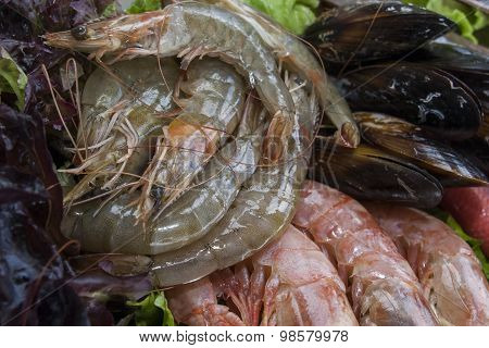 fresh shrimps and mussels