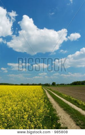 Dirt Road Among Fields