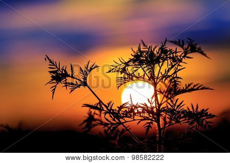Abstract plant against big sun at sunset time
