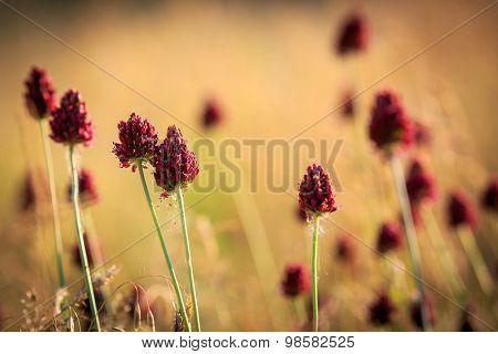 Nice wild flowers on summer meadow