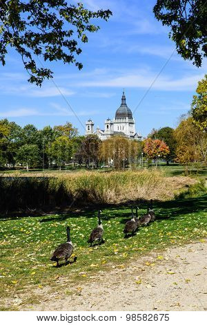 Geese Marching To The Basilica