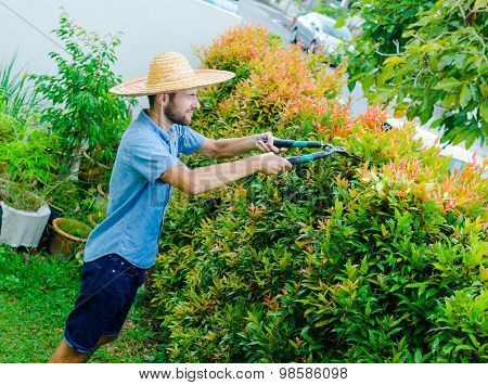 Man cuts bushes with clippers near the house