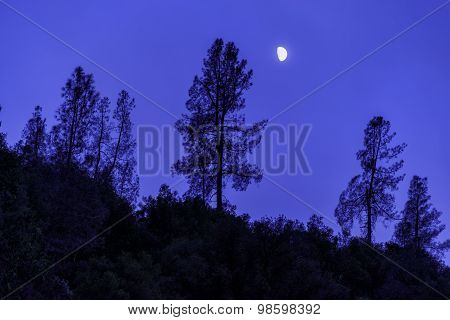 Silhouettes of trees and the moon against the night sky