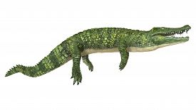 pic of crocodile  - 3D digital render of a green crocodile isolated on white background - JPG
