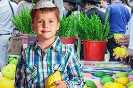 stock photo of sukkot  - The Jewish holiday of Sukkot - JPG