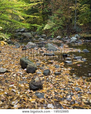 Colorful leaves cover the ground at a mountain stream