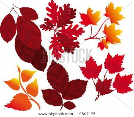 Leaf and branch A set of elements for your autumn design VECTOR (See Jpeg Also In My Portfolio)