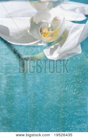 single orchid suspended in water - room for copy