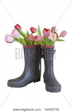 pink & red tulips in boots - isolated on white