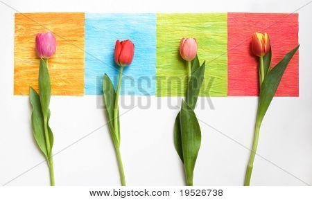 4 tulips on 4 colored squares