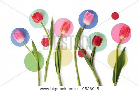 tulips and colored dots on white