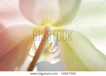 dreamy pastel organic orchid background - backlit