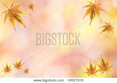 fall background frame with japanese maple leaves and red yellow glow