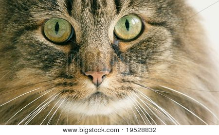 Cat close-up head