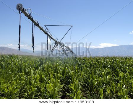Corn Irrigation