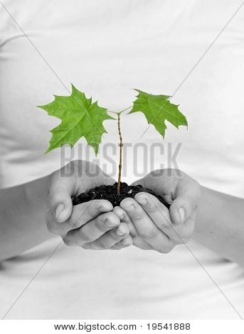 wooman holding a plant between hands on white
