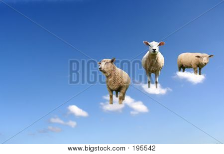Sheep In The Air