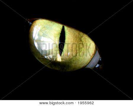Feline Eye