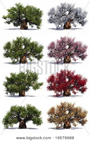 High resolution green,white,pink,red and brown baobab trees collection or set isolated on white background, at high resolution,ideal for nature, season or conceptual designs