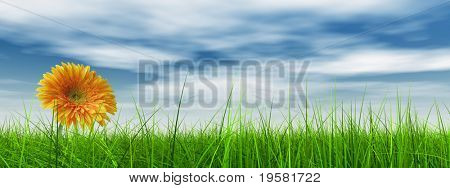 high resolution 3d green grass over a blue sky banner with white clouds as background and a nice yellow gerbera flower at horizon. Ideal for nature,green or sport designs.