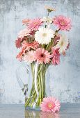 jug of pink gerber daisies on grunge blue background