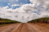 picture of dirt road  - rural dirt road and cloudscape - JPG