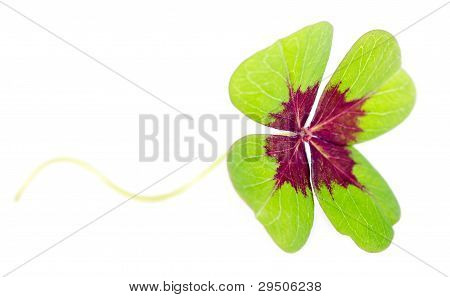 Fourleaved Cloverleaf With Stern