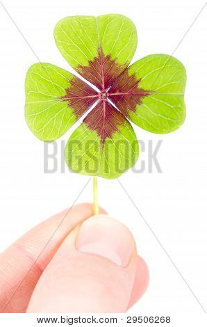 A Fourleaved Cloverleaf Between Two Fingers