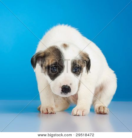 shy and scared little stray puppy on a studio background