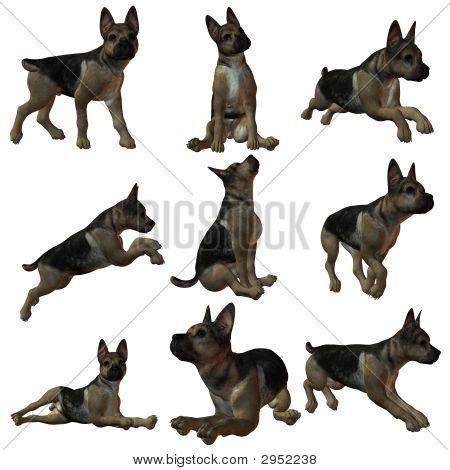 Puppy German Sheperd