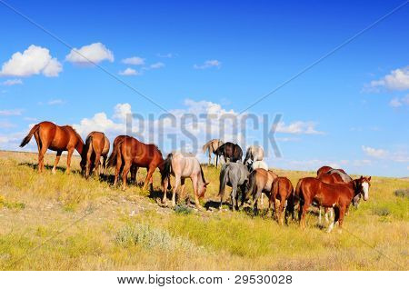 Western horses grazing on Montana grassland