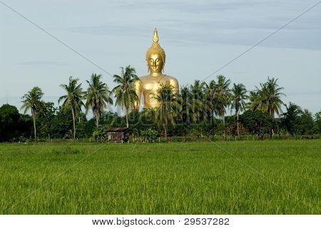 Big Buddha in rice farm .