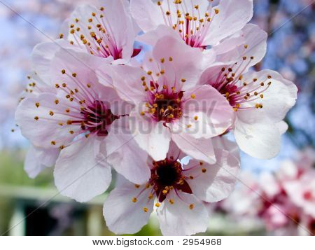 Blossom Bunch