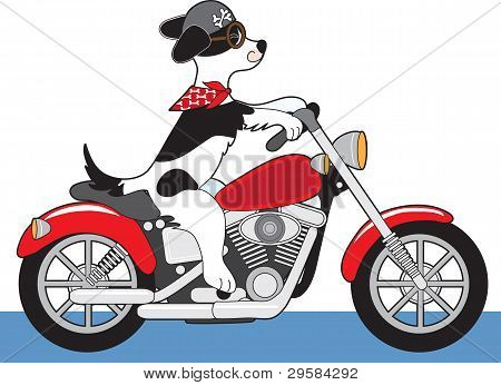 Dog Motorcycle